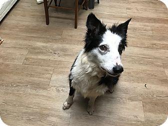 Mount Ida Ar Border Collie Meet Creek A Dog For Adoption