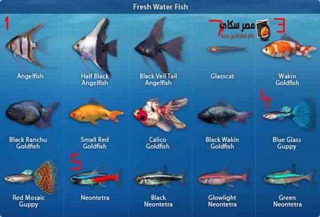 أهم أنواع أسماك الزينة التى يمكن تربيتها بالأحواض بالصور Types Of