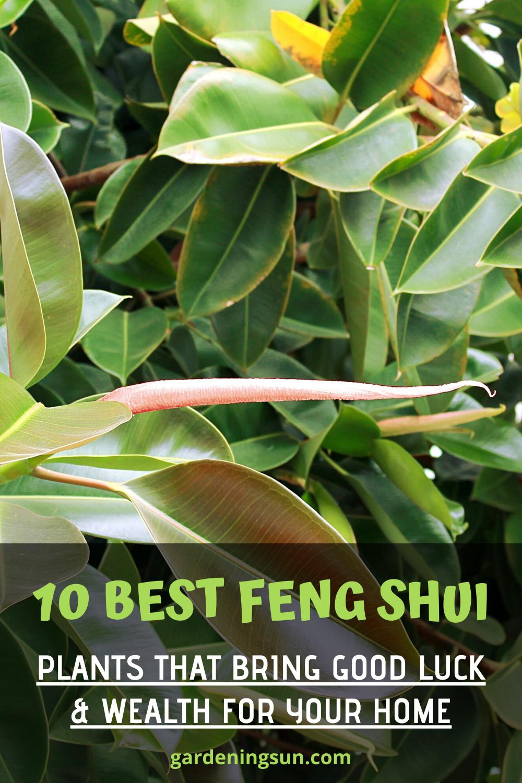 10 Best Feng Shui Plants That Bring Good Luck Wealth For Your Home In 2020 Feng Shui Plants Feng Shui Indoor Plants Feng Shui