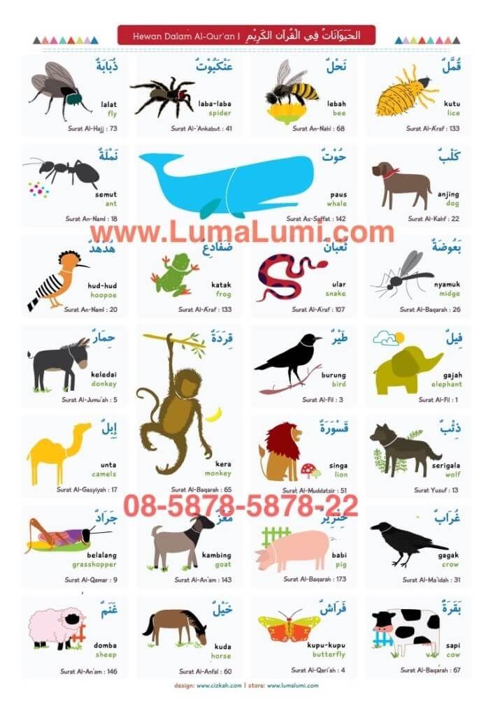 Bahasa Arab Hewan : bahasa, hewan, Image, Result, Bahasa, Nama-nama, Hewan, Gambarnya, Kata,, Learn, English,, Quran