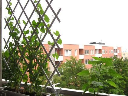 Balcony trellis | Gardening Ideas | Pinterest | Balconies ...