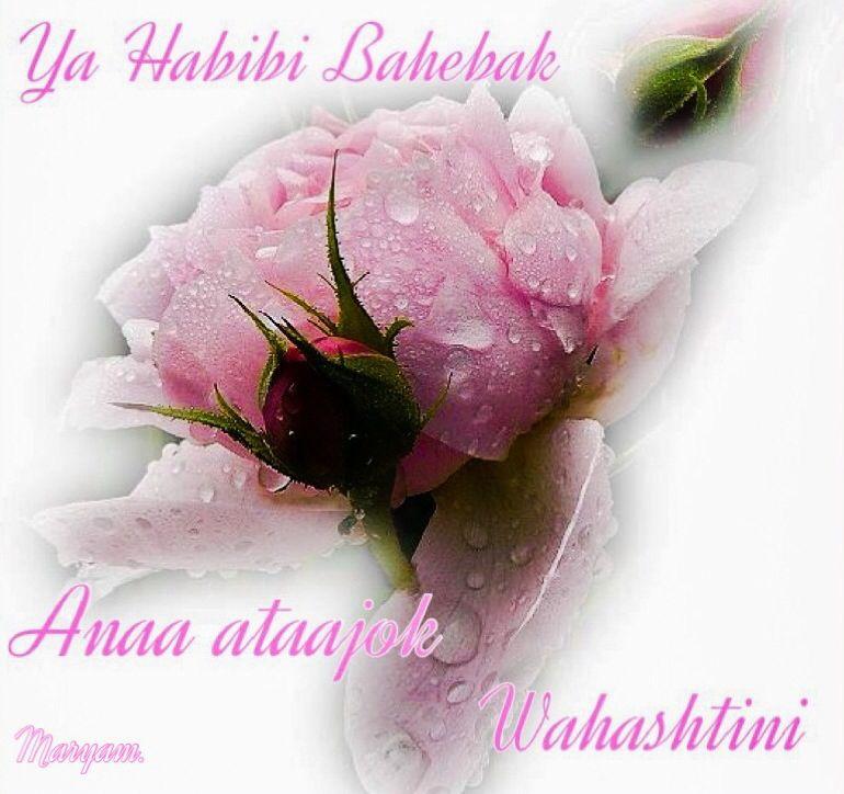 I love you - ya habibi bahebak | ❤️ Sayang Habibi ❤️ | Flowers