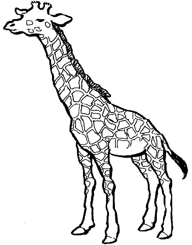 SIMPLE GIRAFFE OUTLINE  you to paint a picture giraffe this