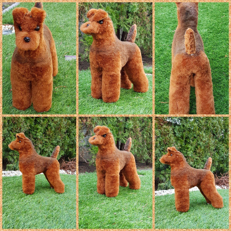 Impressive Model Dog Design By Nikol Kormos With Opawz Model Do