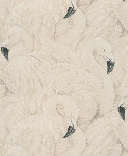 Flamingos - Silvery White   Flamingos!   Pinterest
