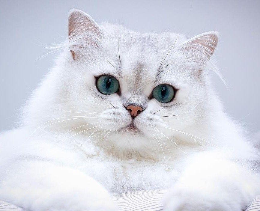 Pin von Sabrina auf Katzen Katzen