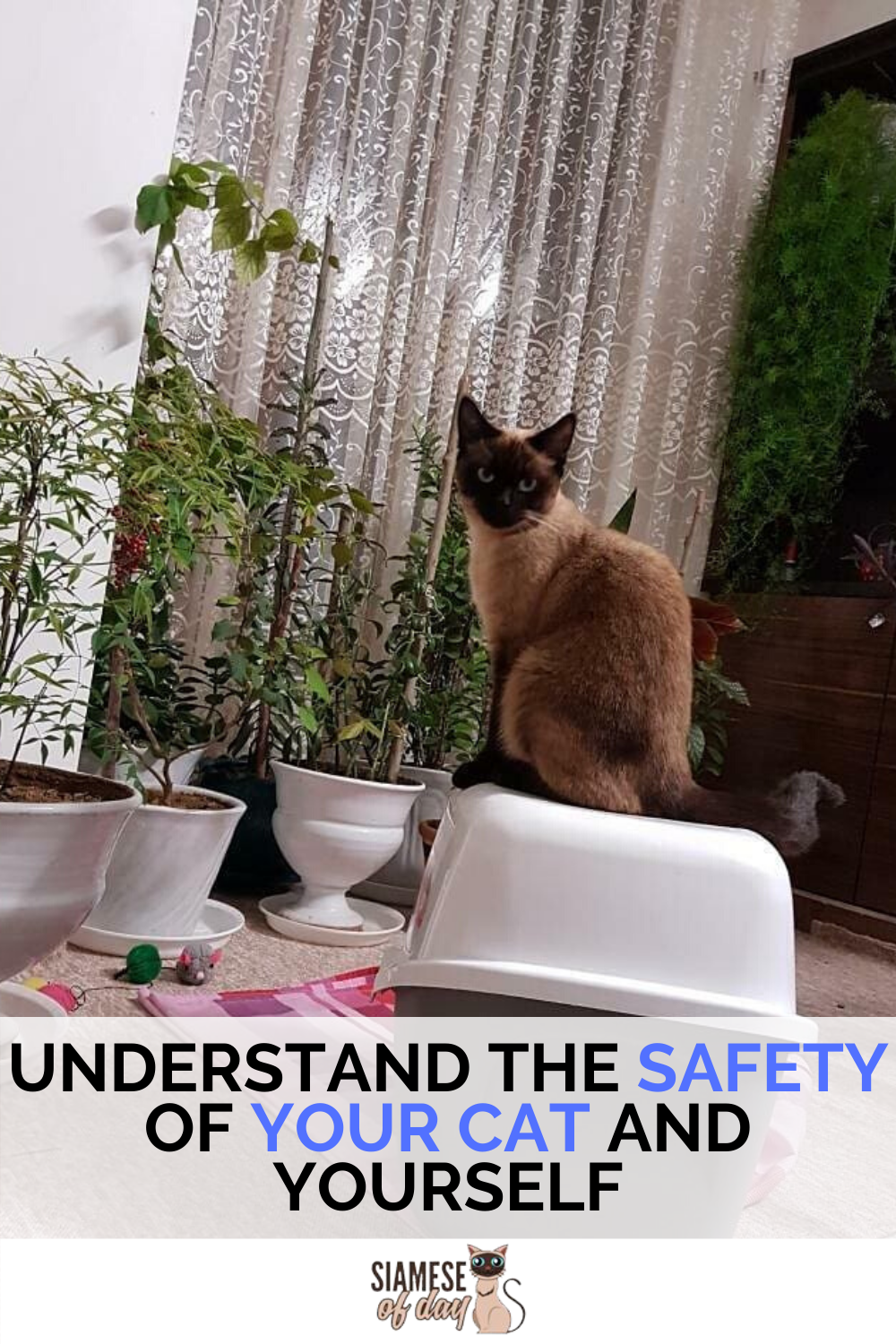 How To Calm A Nervous Cat Kitty Siamese Of Cat In 2020 Cat Behavior Cat Training Tricks Cat Safety
