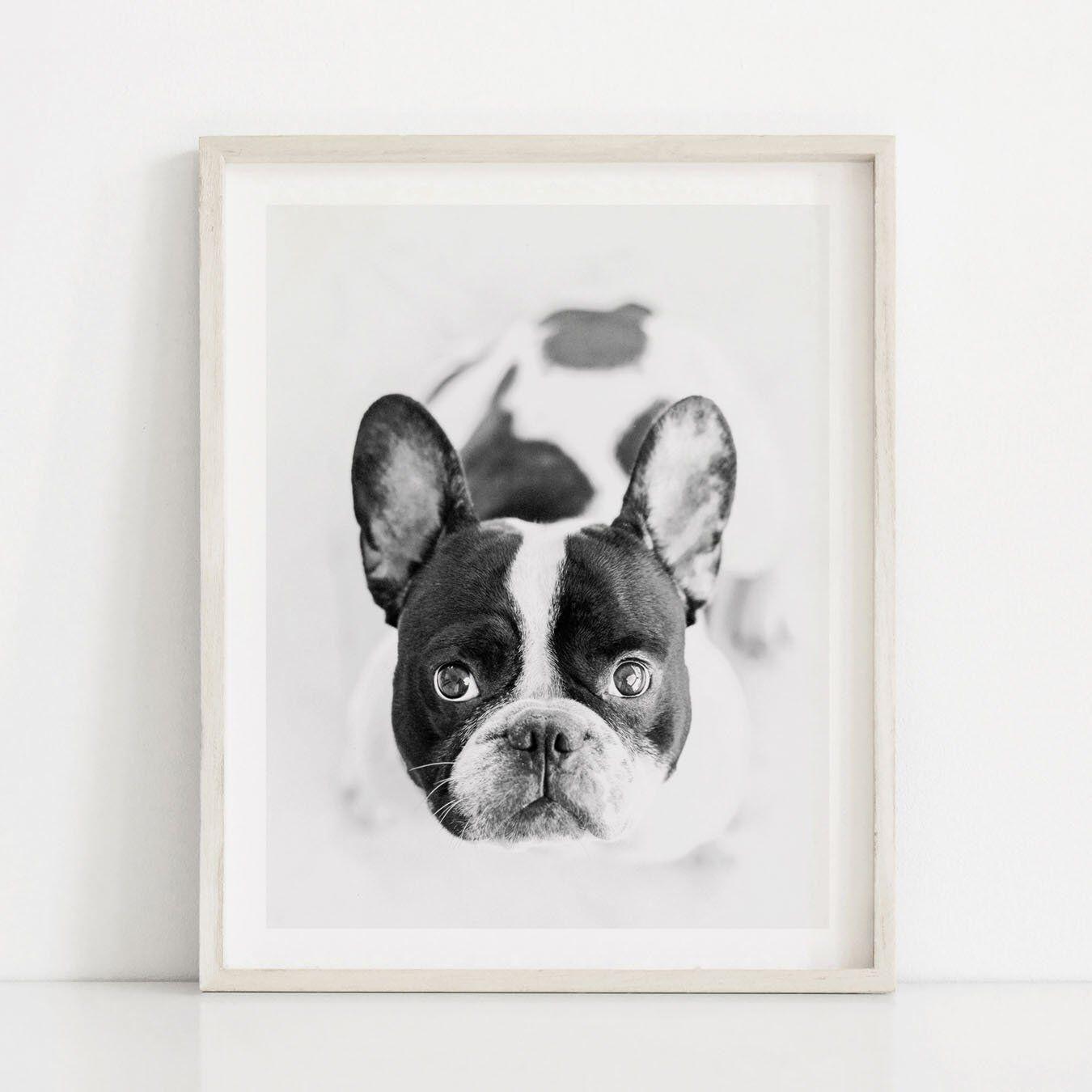 French bulldog print black white dog print puppy wall art puppy