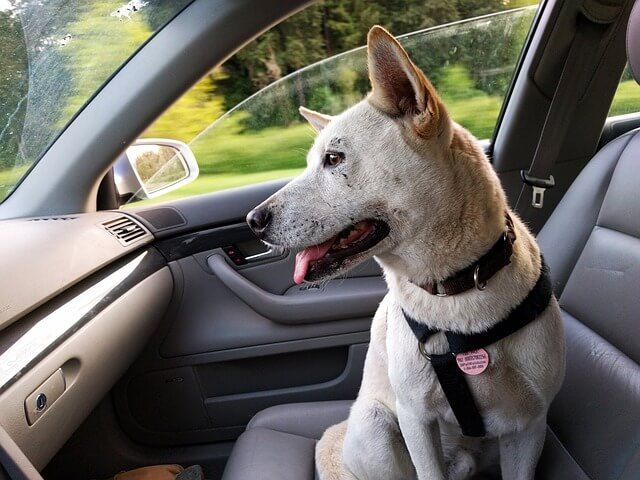 How To Conquer Car Sickness When Transporting Your Pup Car Sick Dog Pet Travel Dog Car Travel