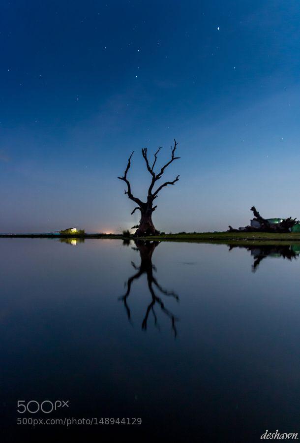 Solitary Tree along U Bein Bridge Myanmar by DeshawnTan