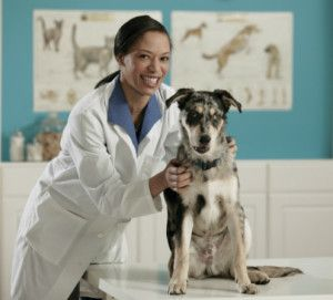 Hire Our Reliable Animal Hospital In North Brunswick Township Nj Faith Veterinary Clinic Services Llc Co With Images Veterinarian Career Veterinarian Veterinary Clinic