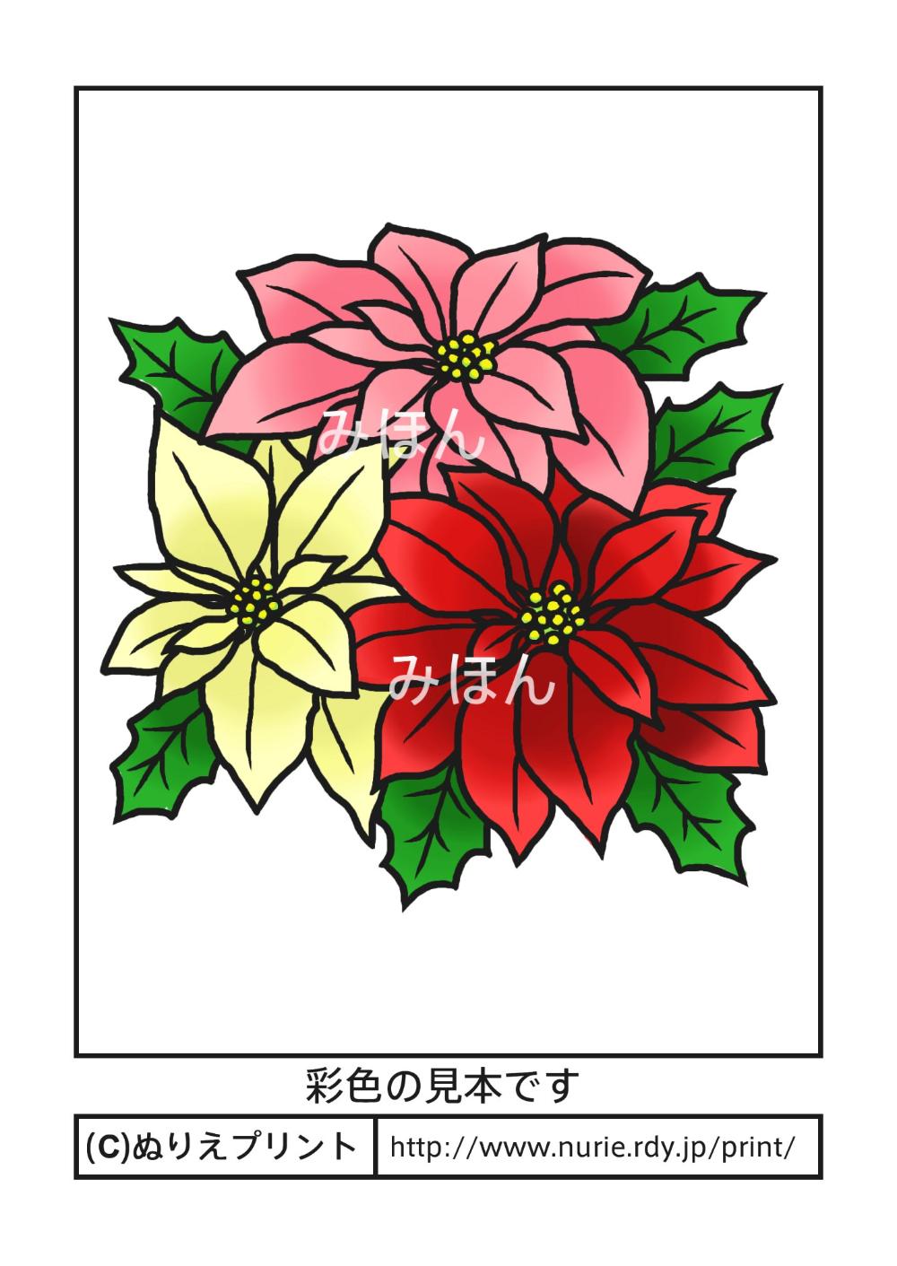 ポインセチア 彩色見本 冬 クリスマスの花 無料塗り絵イラスト ぬりえプリント 塗り絵 無料 クリスマス花 塗り絵
