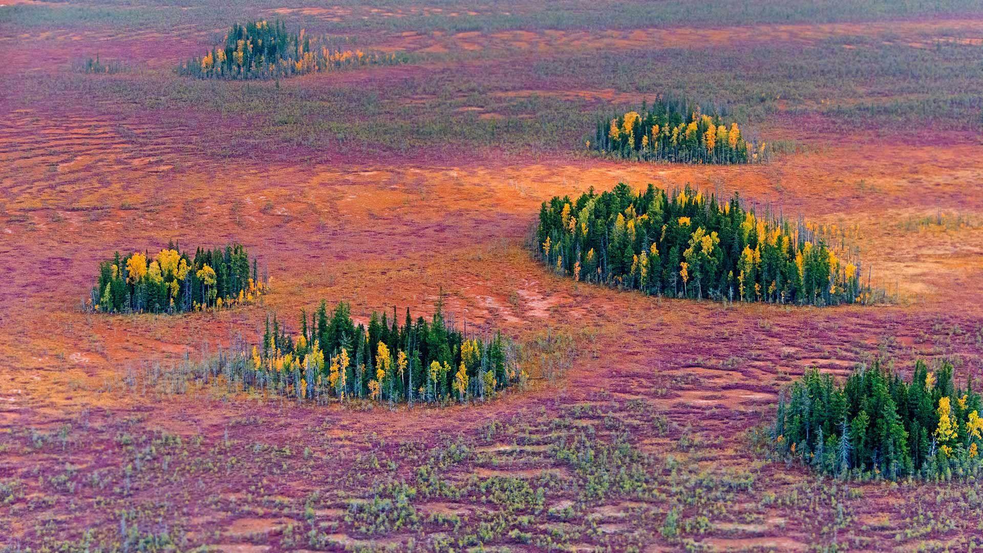 2016-10-09_SiberiaFoliage (1920×1080)