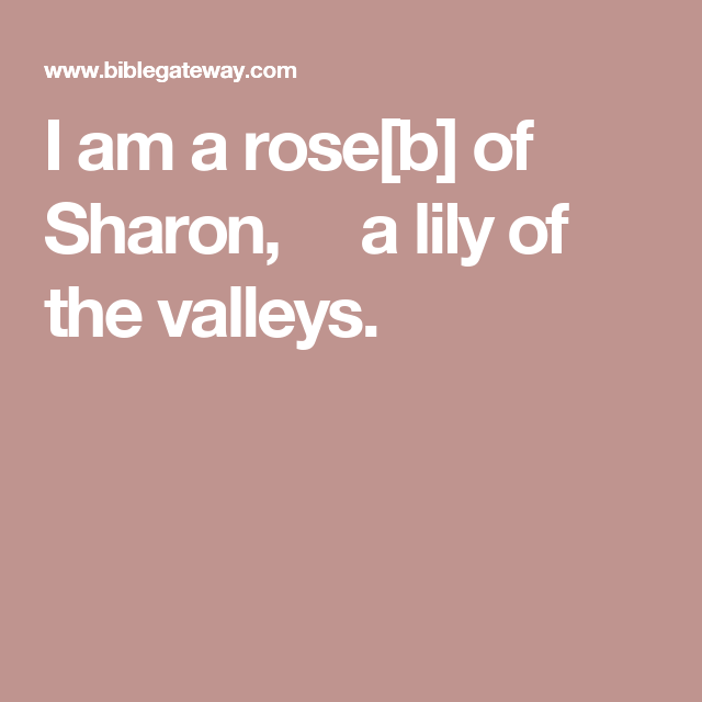 I Am A Rose B Of Sharon A Lily Of The Valleys Rose Of