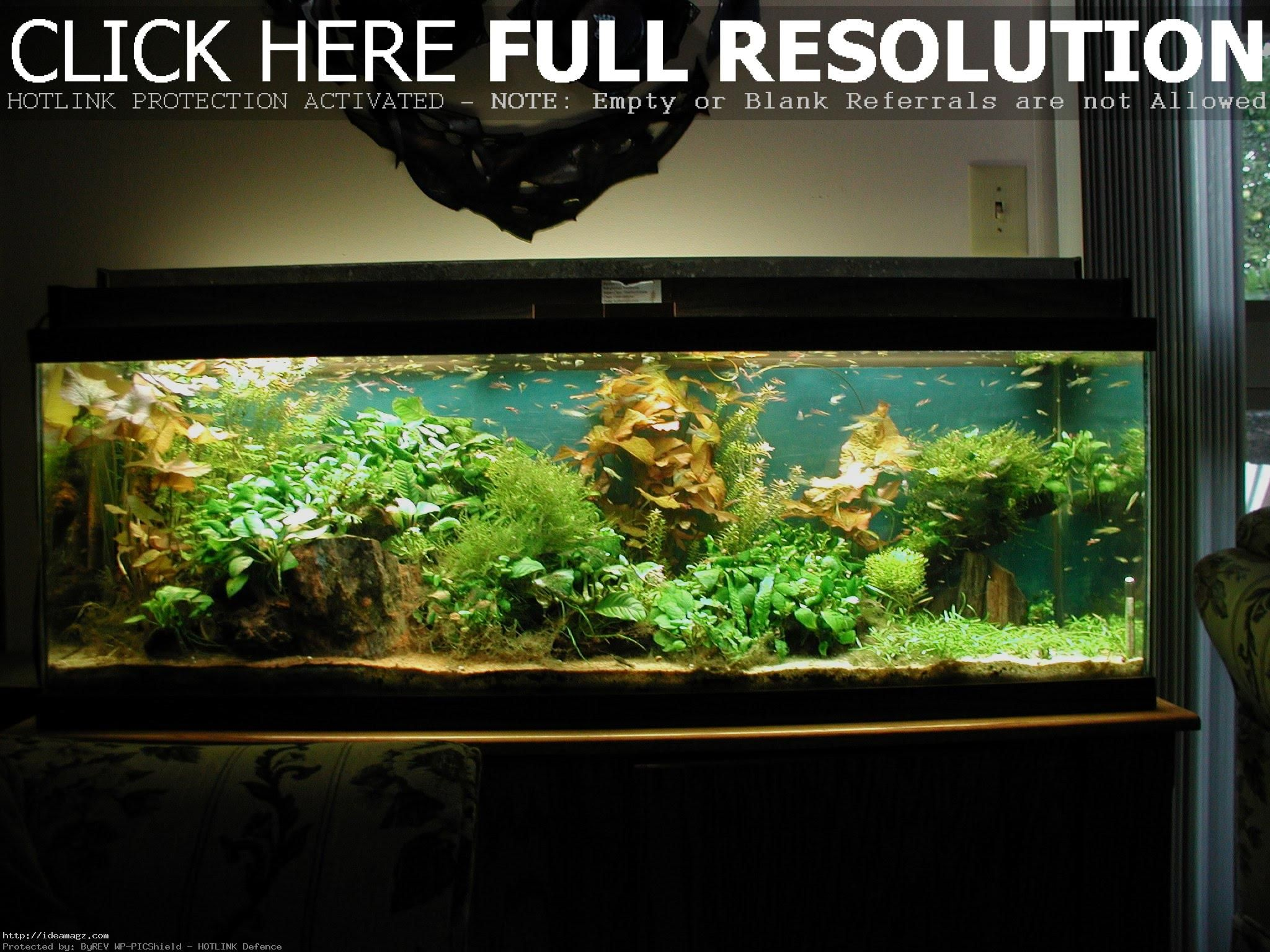 Fish Tank Decorations For Your Living Room Ideas Idea Magz Cool