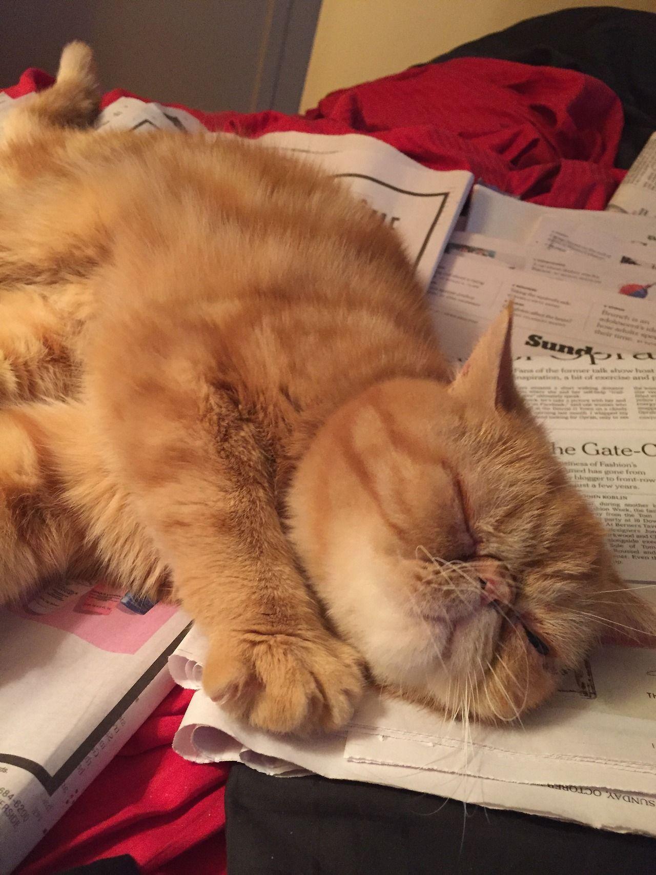 Da news is so oberwhelming. I needz da nap. Cats, Feral