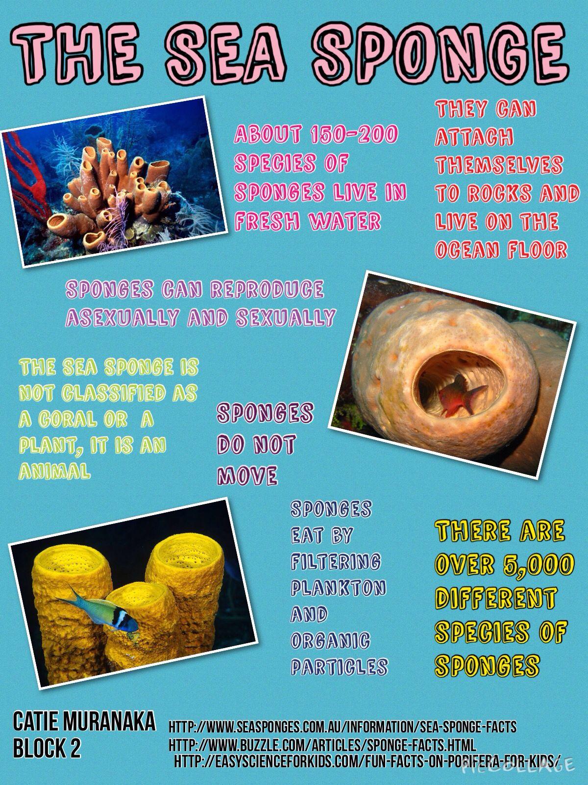 The sea sponge infographic marine biology block 2 pinterest the sea sponge infographic reviewsmspy