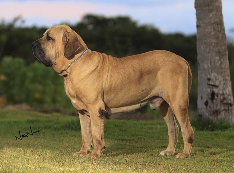 Pin Em Dog Breeds