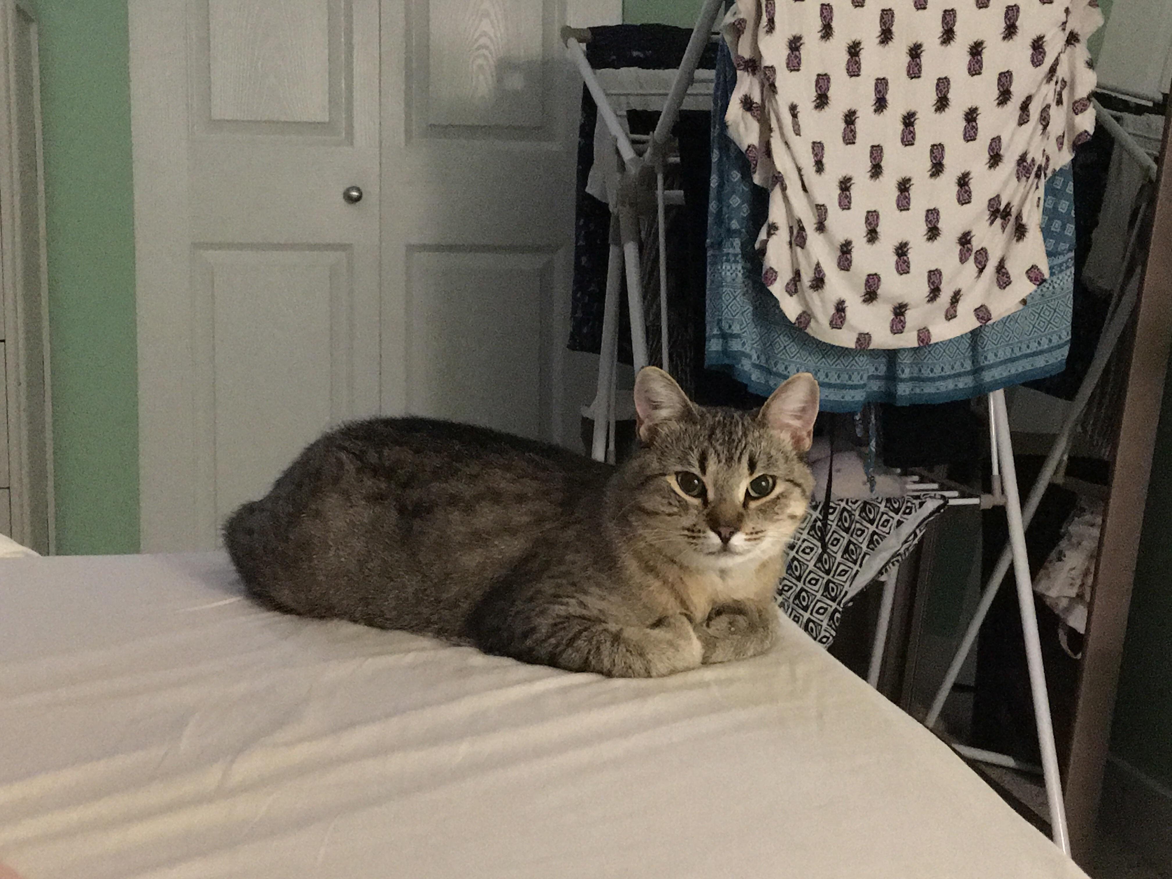 Super shy foster kitty loafing near me! Win! Super cute