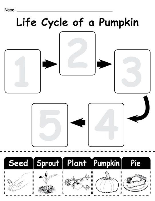 3 Free Life Cycle Of A Pumpkin Printable Worksheets With