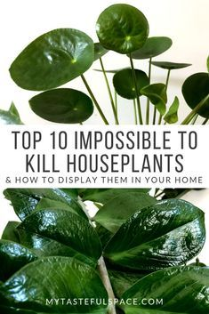 The hardest indoor plants to kill that are a must have for your home and office.  #top10plants #impossibletokillplants #musthaveplants #hardtokillplants #bestindoorplants #besthouseplants #easyindoorplants #indoorplantslowlight #lowlightplants #lowmaintenanceplants #pileaplant #chinesemoneyplant #zzplants #blackthumb #airpurifyingplants