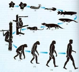 La Evolucion Desde Diferentes Puntos De Vista Evolucion Del Hombre Evolucion Biologica Evolucion De La Vida
