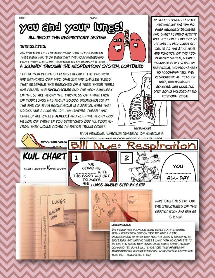 respiratory body system bundle foldable interactive notebook NGSS - kwl chart