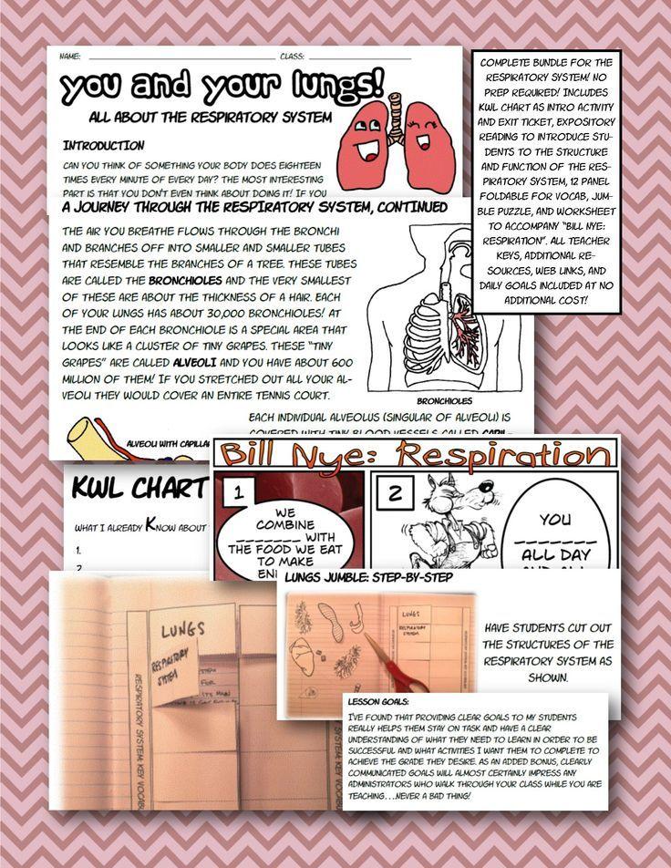 Respiratory Body System Foldable Interactive Ntbk Bill Nye Jr High