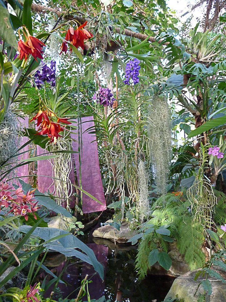 L\'exposition Mille et une orchidées débute aujourd\'hui au ...