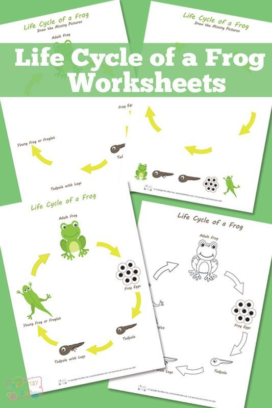 Life Cycle of a Frog Worksheet   Worksheets, Frogs and Cycling