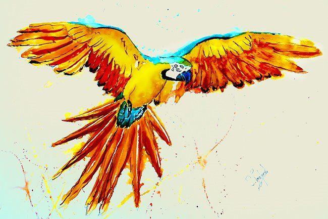 Résultats de recherche d'images pour «parrot watercolour»