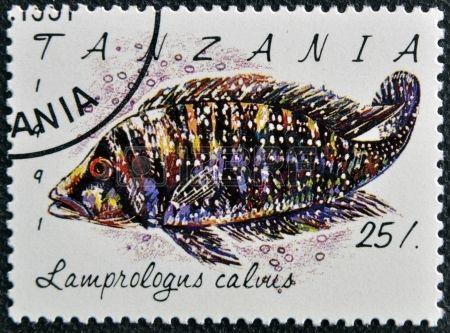 Lamprologus calvus, stamp printed in Tanzania , circa 1991