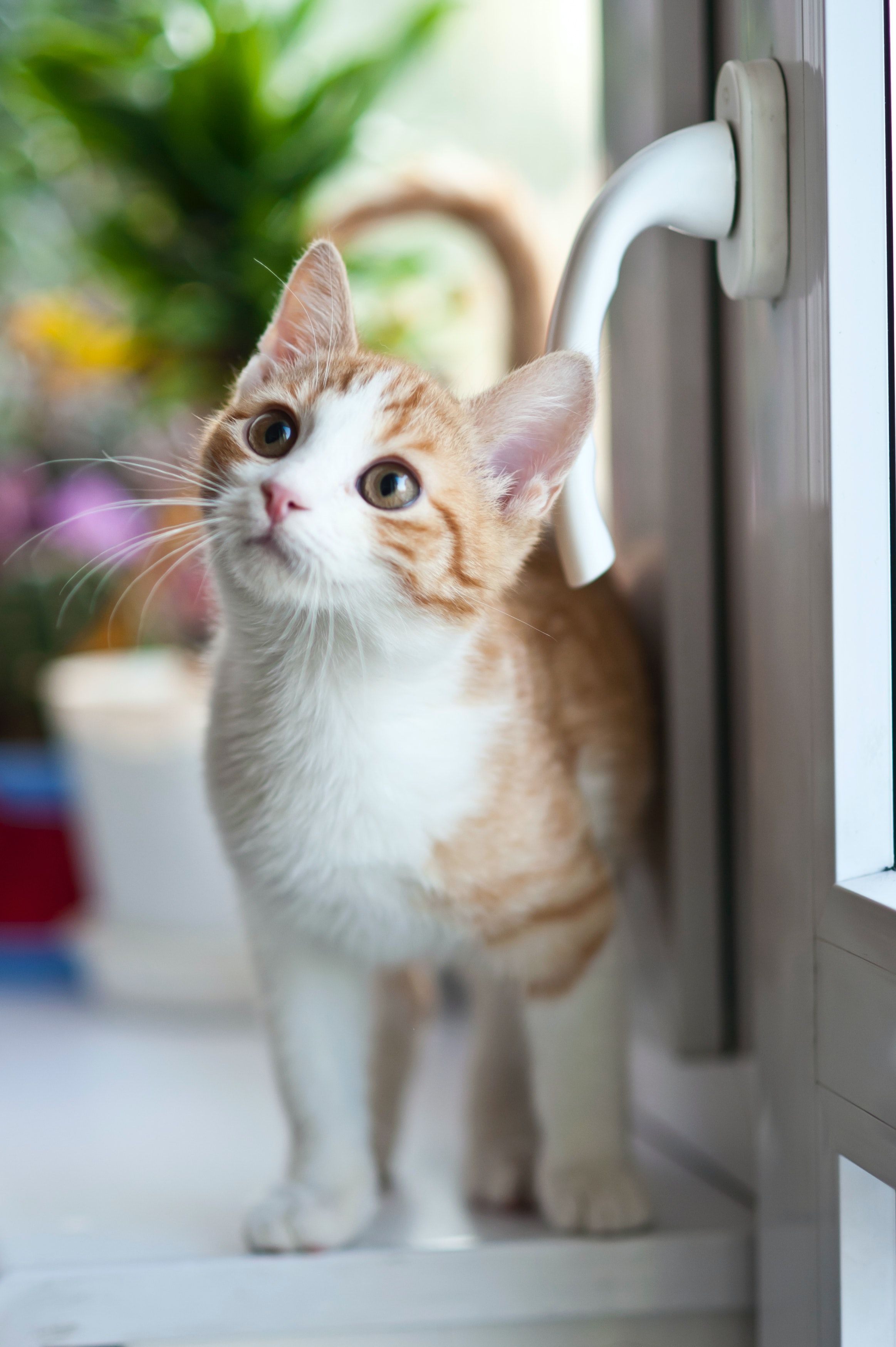 Pin On Pretty Cats