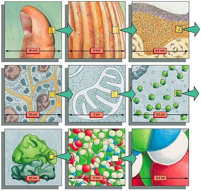 To Get A Sense Of Scale Each Diagram Shows An Image Magnified By A Factor Of Teaching Biology Biology Classroom Biology Lessons