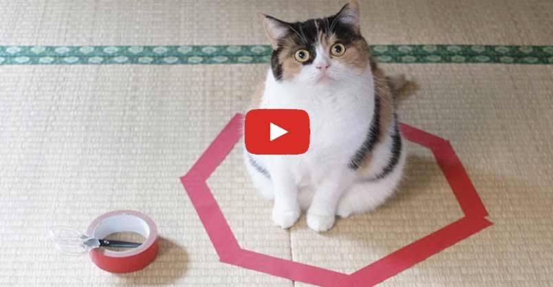 Man Makes An Hilarious Experiment To Figure Out Why His Cat Loves Circles Cat Wallpaper Cat Love Cats Kittens