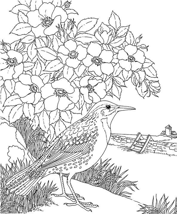 North Dakota Western Meadowlark Coloring Page Purple Kitty
