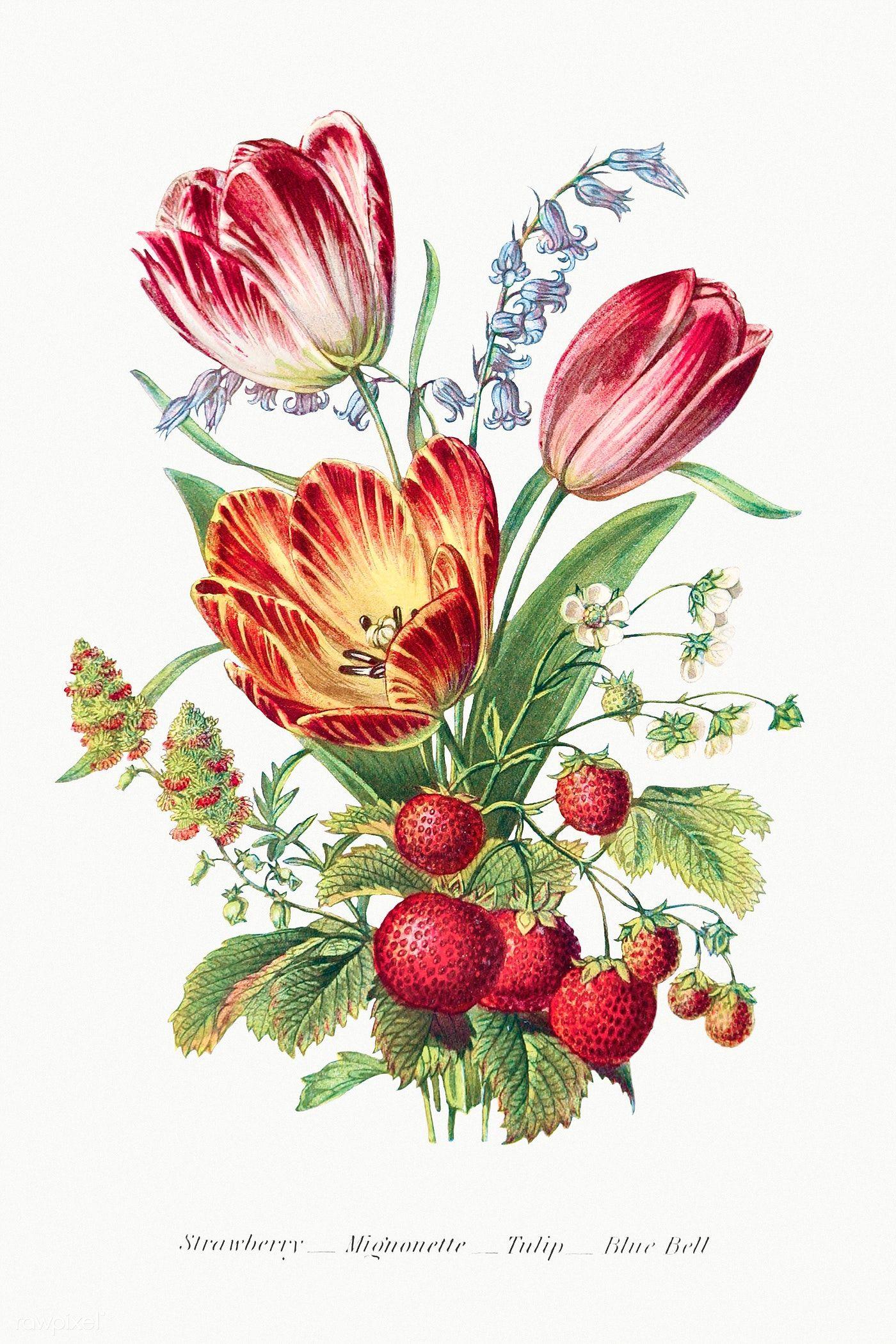 Download Premium Illustration Of Vintage Flower Bouquet Mockup 2098690 In 2020 Flower Illustration Flowers Bouquet Vintage Flowers