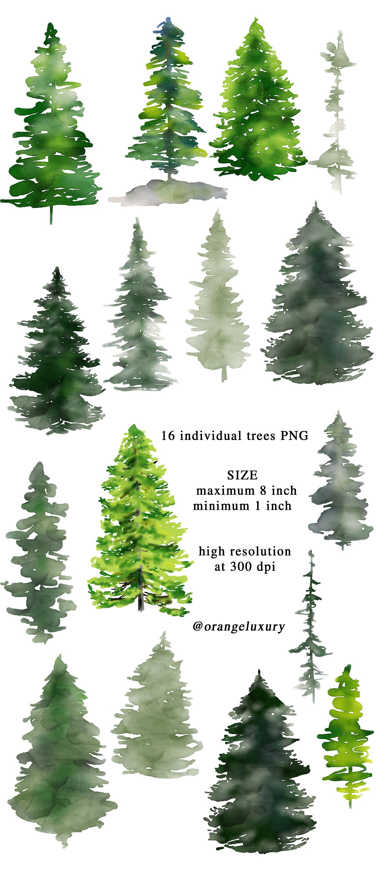 Watercolor Pine Trees Christmas Clipart Winter Clipart Watercolor Conifers Forest Wedding Fir Tree Png Forest Landscape Digital Watercolor Christmas Tree Forest Landscape Watercolor Trees