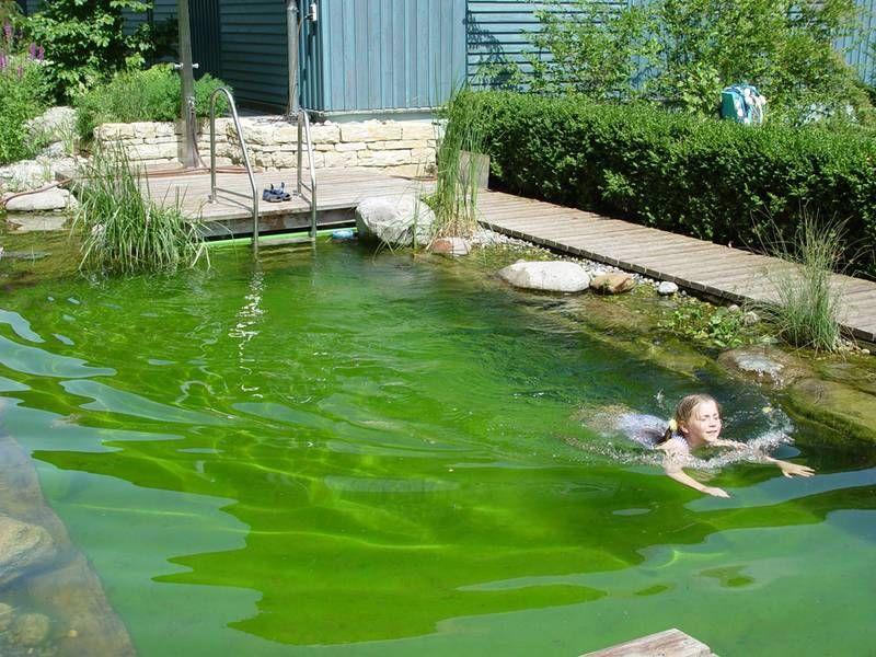 Schwimmteiche Badevergnügen pur Schwimmteiche Pinterest - garten pflegeleicht modern