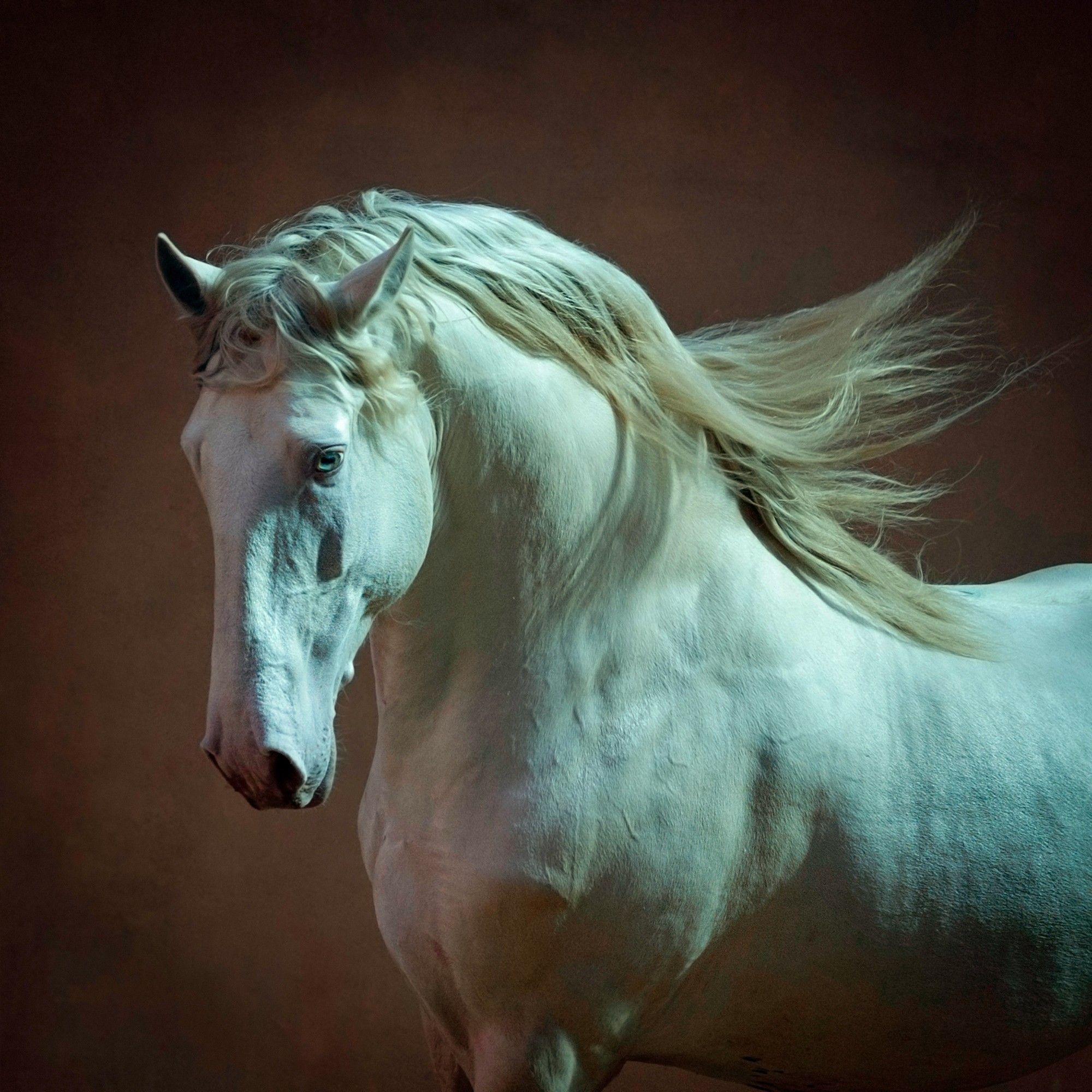 Профессиональная фотосъемка лошадей | Андалузская лошадь ...