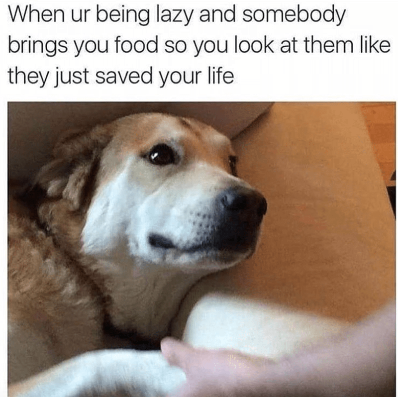 21 Animals Who Are In A Deep Relationship With Food Memes Funny Animals Funny Animal Memes Funny Animal Pictures