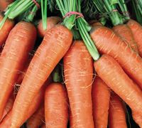 carrots 9. Carrots  For an exceptionally early crop of carrots in spring try growing Adelaide. This fast-maturing variety can be sown as early as November in the greenhouse and as late as July outdoors.