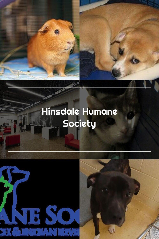 Hinsdale Humane Society In 2020 Humane Society Society Human