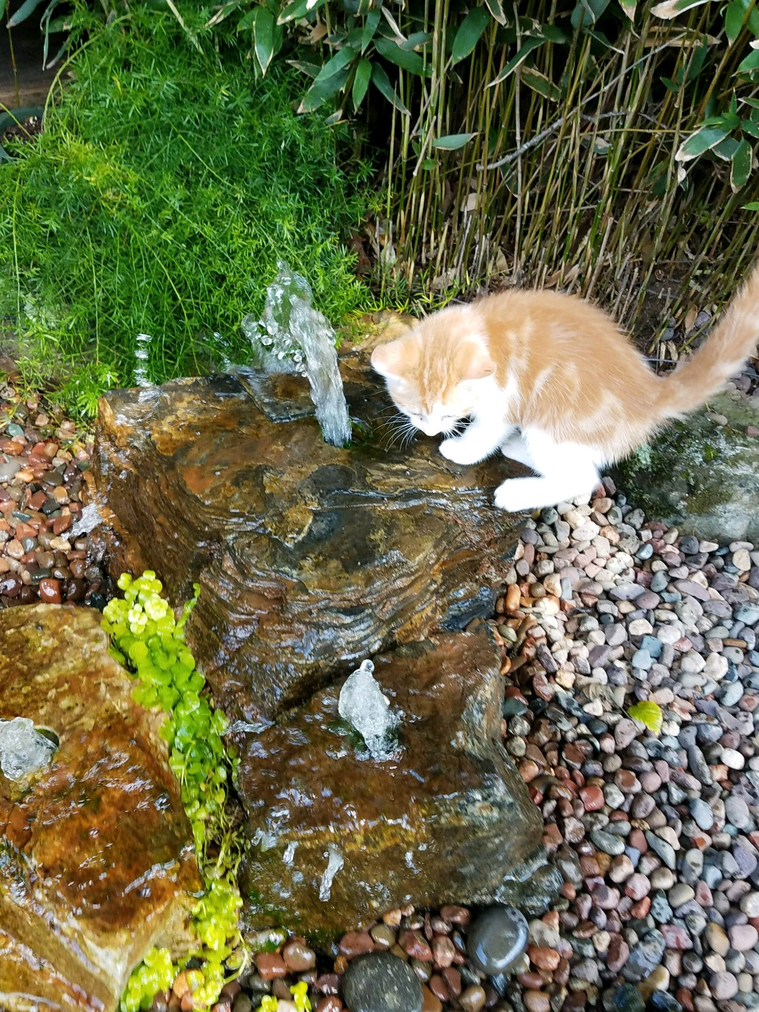 Sundance Loves Water He Plays In And Around The Gardens At Nursery Carters Pond Patio Jackson Tn