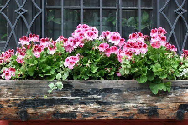 DIY wooden flower box balcony garden ideas window decorating #woodenflowerboxes