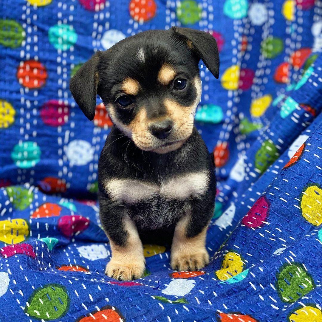 Pin On Gift Ideas Dogs Puppies Xoxo Aurora Lux