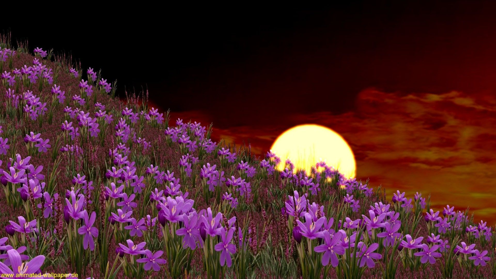 Free Download Animated Desktop Wallpaper Free Download Animated Nature Wallpapers Desktop Flower Desktop Wallpaper Spring Wallpaper Free Spring Wallpaper