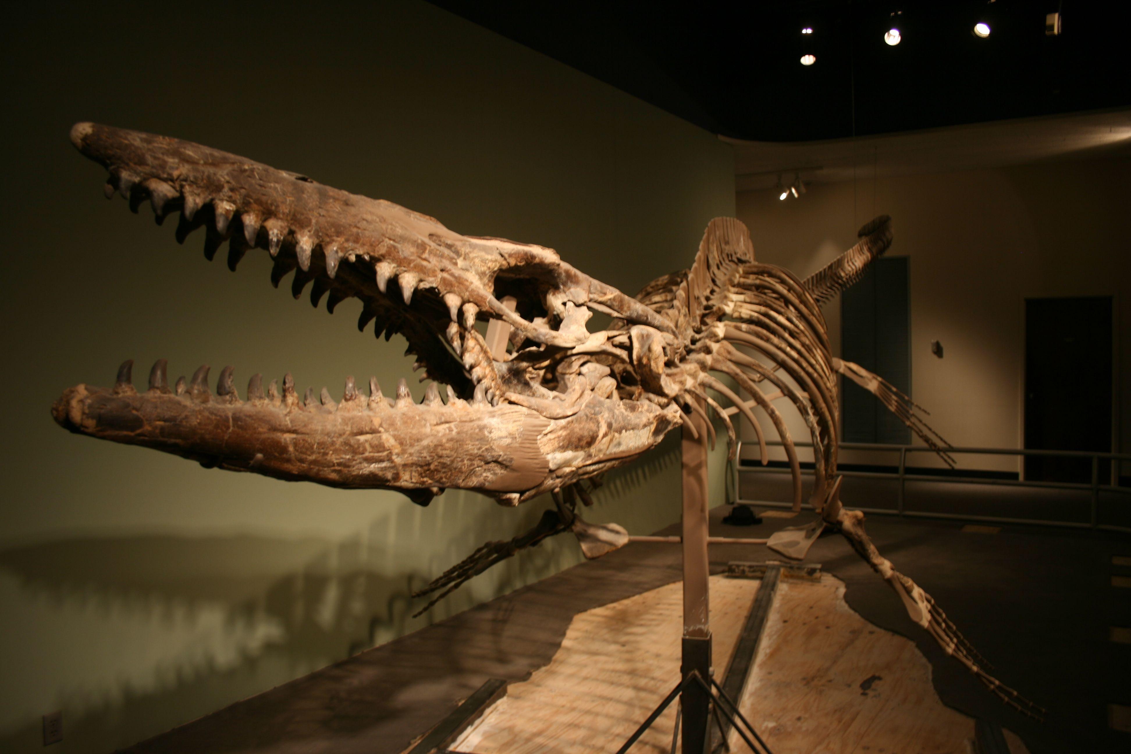 Pin By Lada Hrdlicka On Dinosauri Prehistori Animals