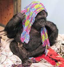 Image result for koko gorilla