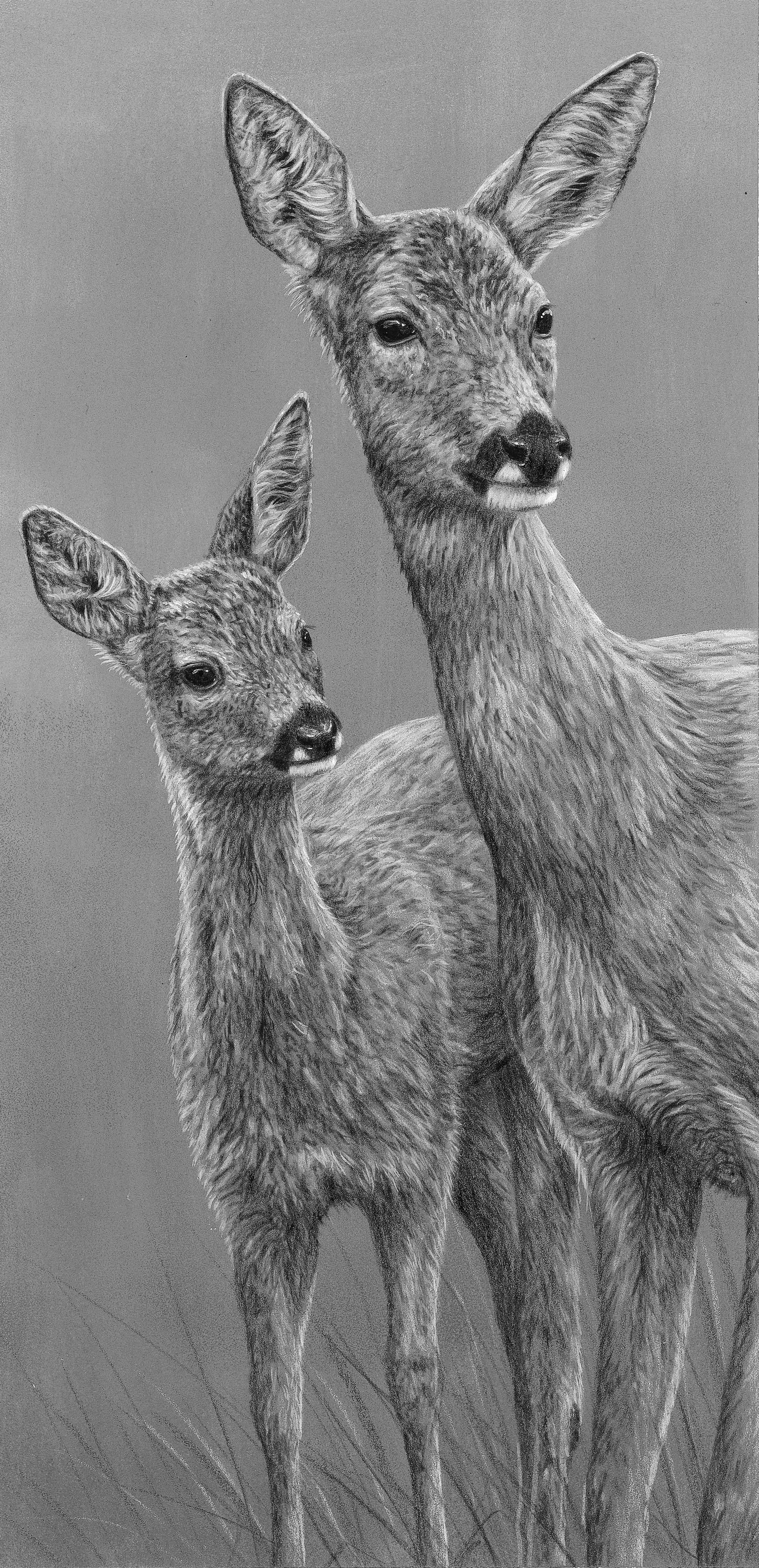 Roe Deer and fawn, pencil and acrylic
